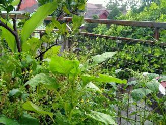 Ilustrasi urban farming.